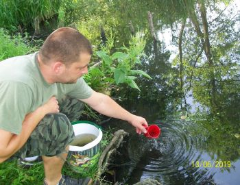Zarybienie narybkiem letnim szczupaka, sandacza i ryb reofilnych – 2019 r.