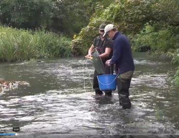 Monitoring ichtiofauny – wody płynące